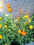 20060324.jpg